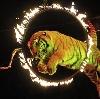 Цирки в Темпах