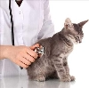 Ветеринарные клиники в Темпах